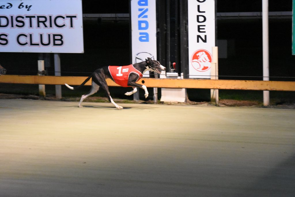 A statewide ban on greyhound racing was rushed through the NSW Parliaments Upper House just before midnight on Wednesday, 10th of August, 2016.Photo Robert Brandolini