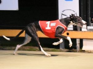 Greyhound Racing NSW administrator to oversee ban
