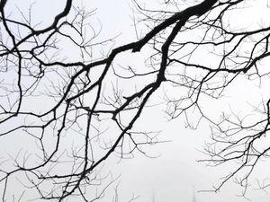 Misty morning across Ipswich
