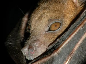 BAT ATTACK: 'It just started gnawing at his leg'