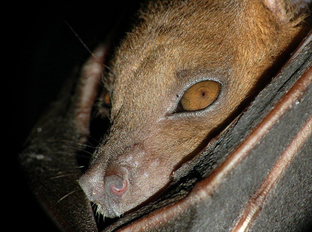 A fruit bat has attacked a boy at a local skate park.