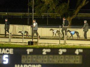 DOG ACT: Greyhound racing ban a 'dagger to the heart'