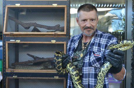 Trained snake catcher Matt Moon with a jungle carpet python, Charlotte.