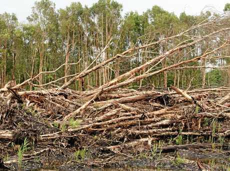 Trees and vegetation clearance on the Sunshine Coast. Photo:Nicholas Falconer / Sunshine Coast Daily