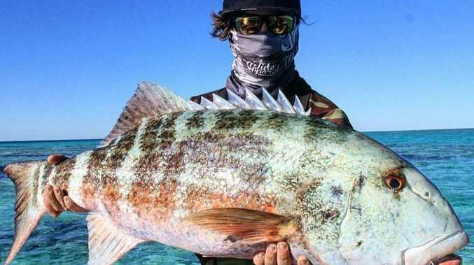 Cody Ison caught this massive chinamon on a stickbait at Gould Reef off Dingo Beach.