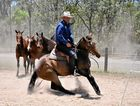 CLASS: The Australian Stock Horse ambassador Guy McLean working his horses.
