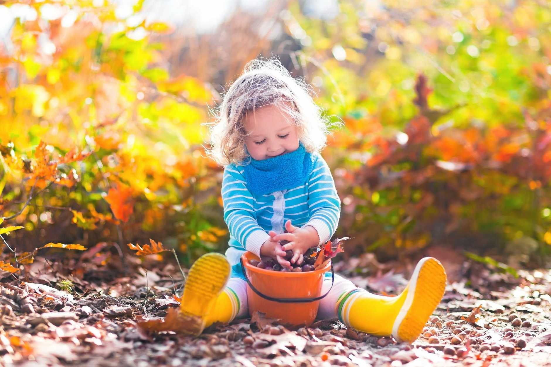 Girl holding acorn and colorful leaf in autumn park. Child picking acorns in a bucket in fall forest with golden oak and maple leaves. Children play outdoors. Kids playing and hiking in the woods. Thinkstock image