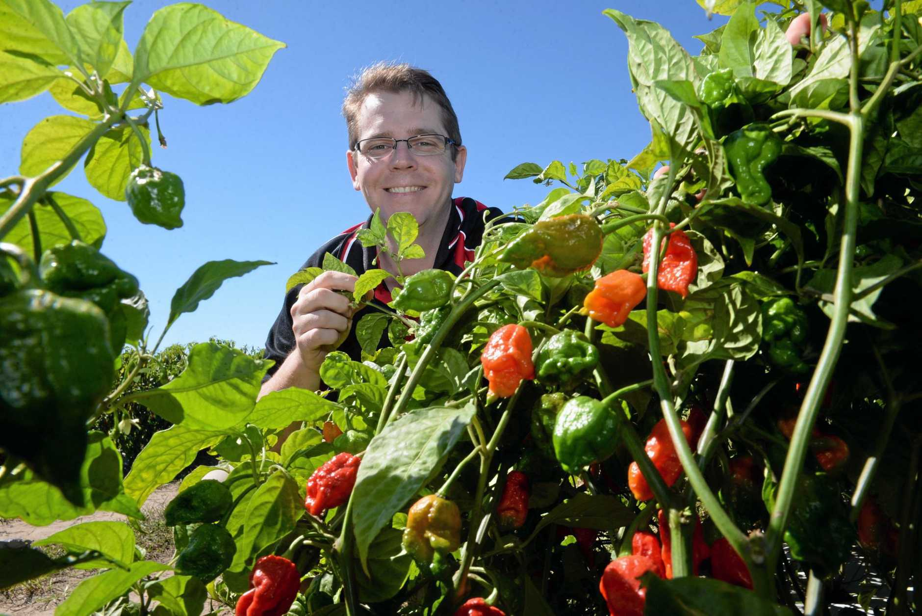 AUSTCHILLI: Trent De Paoli with the hottest variety of chilli in the world, the Carolina Reaper. Photo: Mike Knott / NewsMail