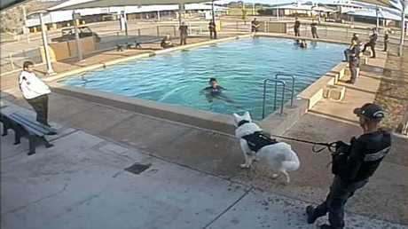 A photo released by Amnesty International Australia showing a guard allegedly using an unmuzzled dog to scare a young woman attempting to get out of the pool.