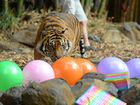 Tiger twins celebrate their third birthday