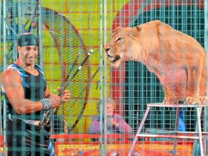 Lion tamer: You've got to know when they're having a bad day