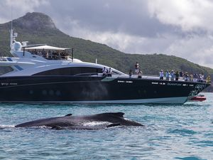 Layday comes early with whales providing a show