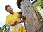 M'boro bee hive takeover is a bit like Australian politics