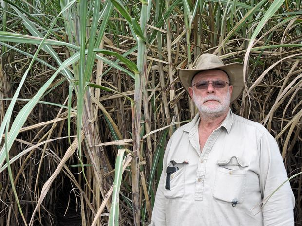 CHANGES: Cane farmer Serg Berardi is feeling the effects of wet weather and proposed changes to the Sugar Industry Act.
