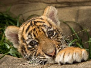 7 photos of tiger cubs that will melt your heart