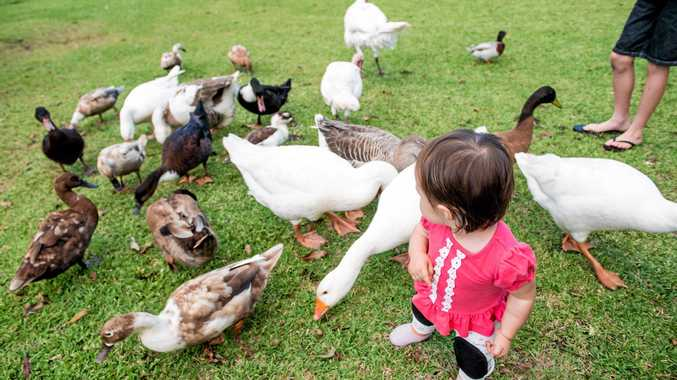 Animals are guaranteed to keep kids entertained.