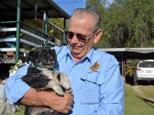 Animal therapy helps Vietnam veteran