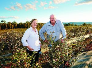Northern Rivers blueberry grower wins national award