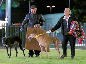 Casino vet slams greyhound 'experts'