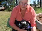 Debbie Nicolaides with 'Marmite', who was one of her Wild River Goats available to be petted at the Southside markets.