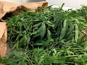 How you can grow cannabis legally