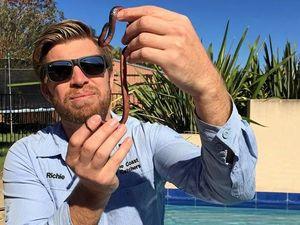 Snake found in pool filter box makes a splash