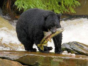TRAVEL: Alaska's too adorable to bear