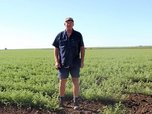 Chickpeas thrive in warm, wet winter