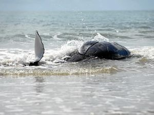 Why whales keep washing up on our beaches