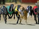 Greyhound racing will remain in NSW