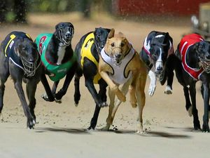 "Greyhound racing ban: ""I got it wrong,'' says Baird"