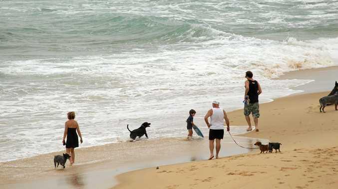 BEACH BUDS: Dogs play on a beach in Kawana.