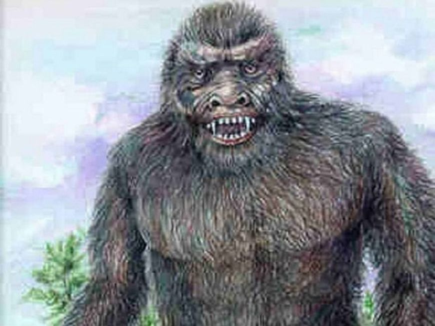 The yowie has been spotted in Toowoomba.