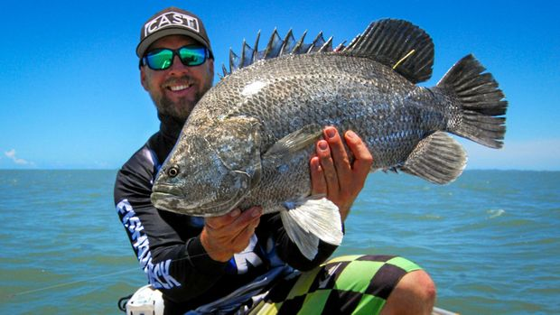 Gladstone 39 s recreational fishers could pay licence fee for Triple tail fish