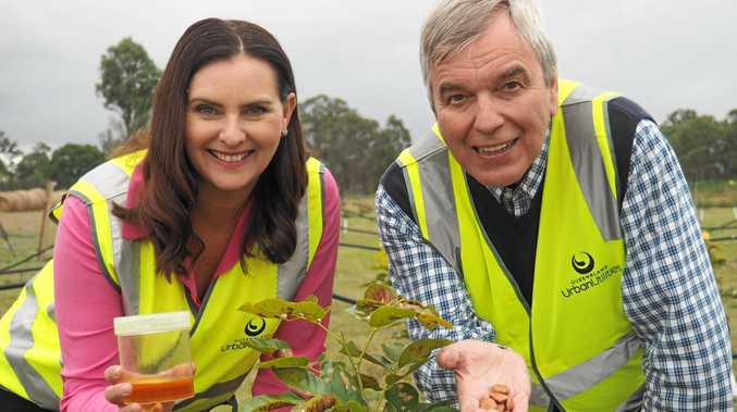 REVVED UP: Queensland Urban Utilities spokeswoman Michelle Cull and UQ Professor Peter Gresshoff are excited by a trial that uses sewage waste to irrigate 4000 pongamia trees. The oil from the trees' seeds can be converted into biodiesel to run cars.
