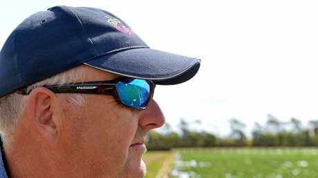 BACKPACKER TAX: Bruce Mcpherson has strong views on how the changes will affect Tinaberries farm in Bundaberg. Photo: Paul Donaldson / NewsMail