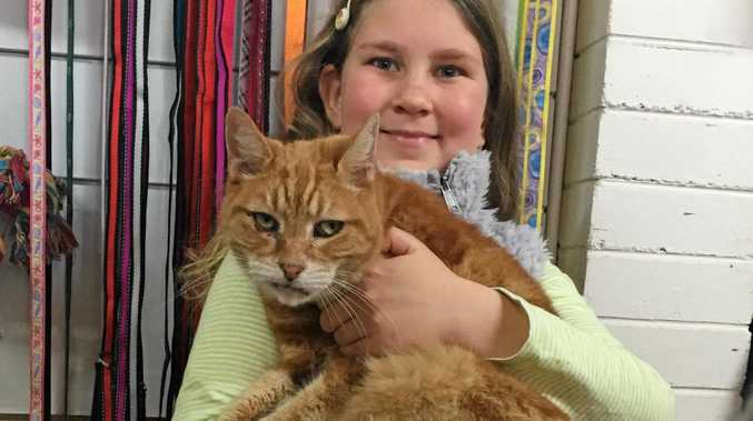 Isadora Jacobs, 8, is on holiday from New Zealand and loves animals. She agreed to take part in our story to highlight the problem of domestic violence when she heard it wasn't just people who were the victims of this issue in our communities, but pets as well. She and Ginger \