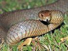 Spring brings soaring snake numbers