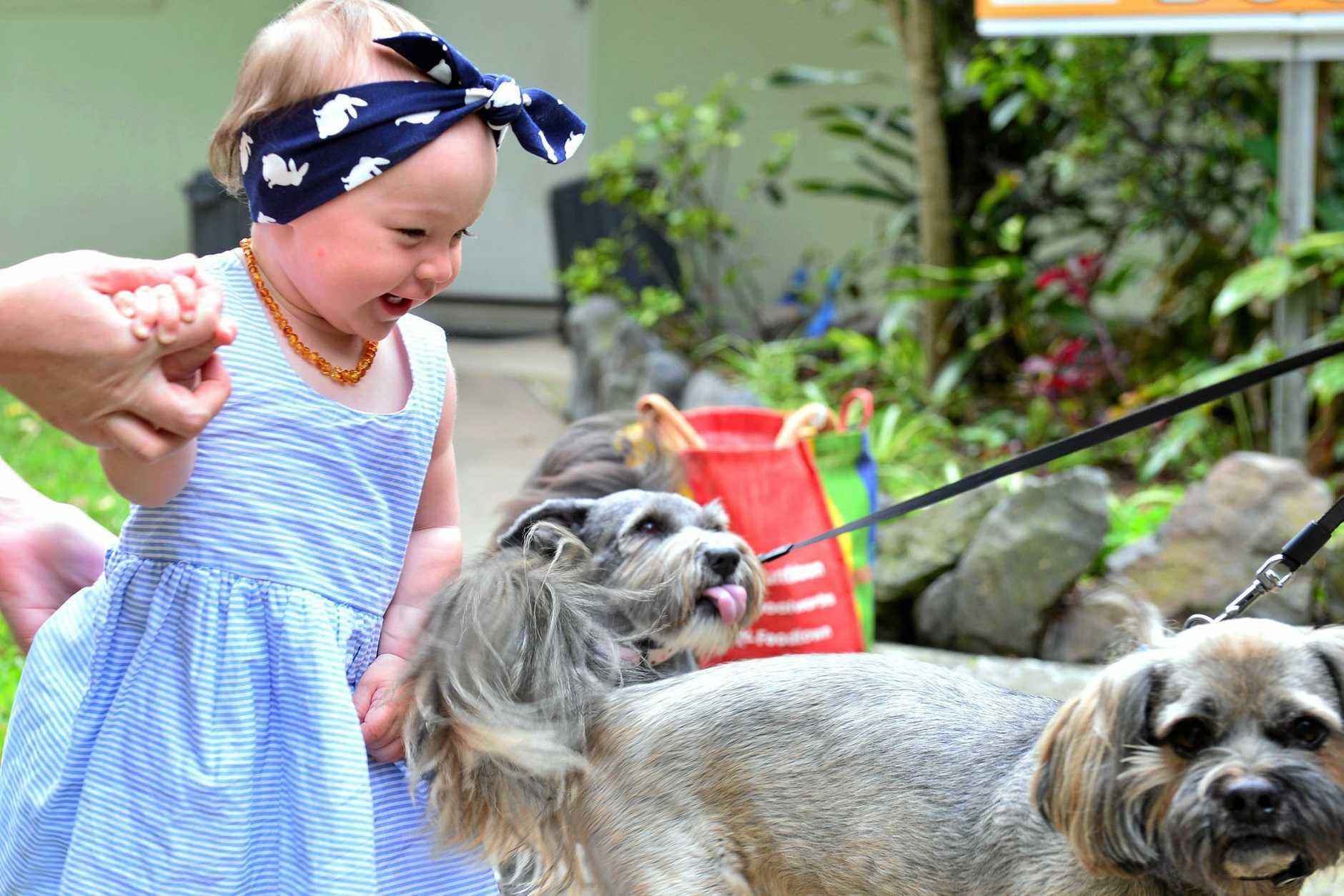 Birthday girl Esme Aspland celebrated her first birthday at Sunshine Coast Animal Refuge where she donated food, toys and blankets with her parents help.  Photo: John McCutcheon / Sunshine Coast Daily