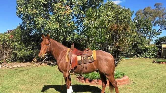 Vendor Tony Phillips will sell Lot 14 Stylish N Sassy at the Nebo Working Horse Sale.