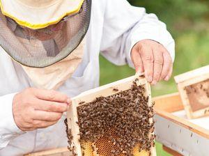 Beekeeper stung by $10k honey haul