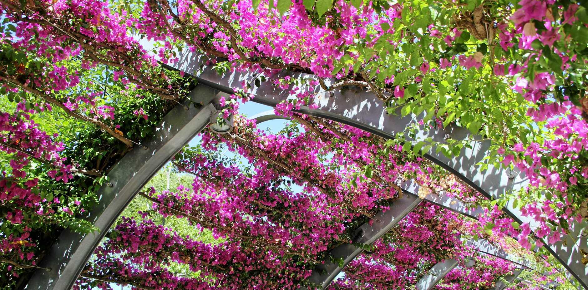 Southbank's iconic bougainvillea-adorned pathway.