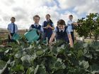 Darling Downs Christian School students (from left) Jesse Higgins, Maya Strong, Shanze Wilkins, Dakotah Verhoek and Caleb Joyce in the kitchen garden at the school.