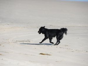 Parvovirus alert: Keep your dog safe