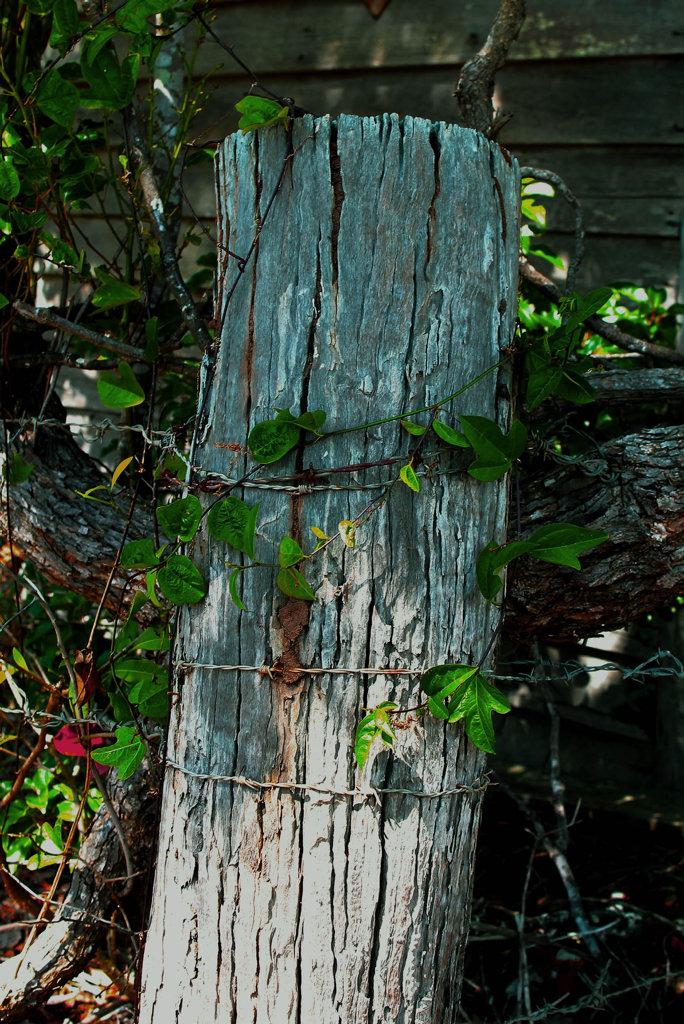 Post and vine in Nikenbah.