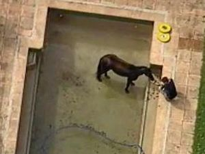 Horse stuck in backyard pool