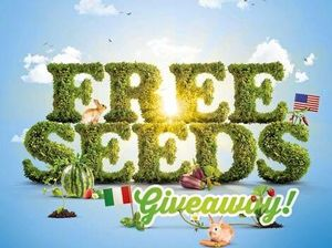 From free things, big things grow: free seeds on Saturday