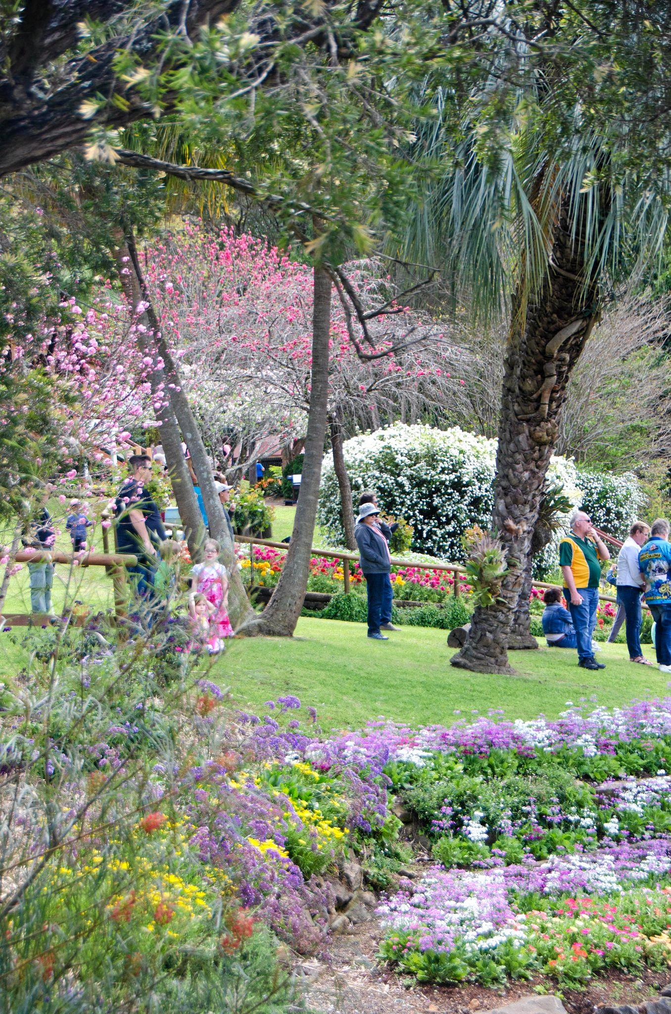 ALL ABOARD: Thousands of visitors each September enjoy the magnificent display of poppies, snapdragons, petunias and more in the beautifully landscaped Spring Bluff Railway Station gardens.