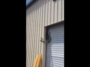 Snake fight