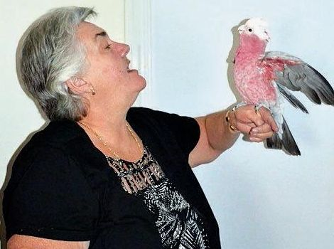 BIRD THERAPY: Lyn Carr with four-year-old galah Freddo who she has she raised since he was four weeks old.